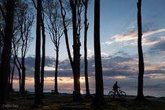 Late (Collin Key) Tags: beechtrees trees gespensterwald ostsee balticsea buchen spookyforest coast landscape dusk nienhagen mecklenburgvorpommern deutschland de