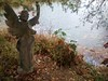Angel (Bildflut85) Tags: autumn fall park nature forest wood lake pond wald herbst see teich weiher natur peer pier steg holz angel statue engel