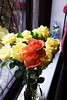 DSC_4271 (PeaTJay) Tags: nikond750 reading lowerearley berkshire macro micro closeups gardens indoors nature flora fauna plants flowers rose roses rosebuds