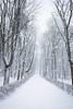 Warsaw the white (_Maganna) Tags: warsaw poland outdoors outside nikon winter snow park snowing trees walk