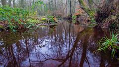 2017-01-17 Rivelin-7430.jpg (Elf Call) Tags: nikon rivelin river yorkshire water stream 18105 sheffield steppingstones waterfall d7200 blurred