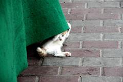 Babycat (tola_93) Tags: cat shan animal animals green street baby babycat love katze cute süs