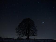 Sirio, la stella più luminosa del Cielo (Fernando De March) Tags: stellesiriocielonotturnanotteinverno
