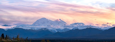 The Great One (Stephanie Sinclair) Tags: thegreatone usdepartmentoftheinterior alaska canon80d denalinationalparkandpreserve magichour mountains panorama seattleempress stephaniesinclairphotography sunset trees findyourpark resistance altnps altnationalparkservice resist hismajesty denali