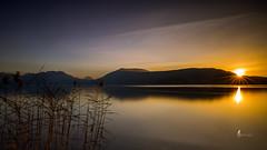 Les roseaux (pierrelouis.boniface) Tags: sunset sun lake lac annecy hautesavoie france canon montagne mountains water