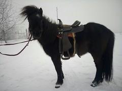 """Конный клуб """"Серебряная подкова"""""""