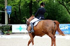 IMG_0937 (dreiwn) Tags: horse pony pferde pferd equestrian horseback reiten horseriding dressage hänger 2015 reitturnier dressur pferdekopf dressuur junioren ridingarena pferdesport doublebridle reitplatz reitverein pferdehänger kandare turnierreiten dressurprüfung ldressur