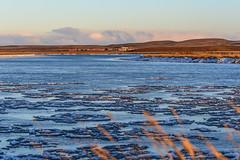 Invierno en el Rio Grande (Fueguino01) Tags: winter patagonia snow ice luz argentina rio river nikon farm nieve estancia invierno hielo d5200 fueguino01