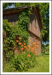 Weathered Barn with Day Lilies (sjb4photos) Tags: barn michigan daylilies southlyon