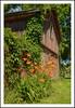 Weathered Barn with Day Lilies (sjb4photos) Tags: barn michigan daylilies southlyon