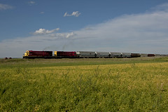 B Boats and Canola (Trevor Sokolan) Tags: railroad red canada field train rail railway trains canadian crop sk prairie saskatchewan prairies railfan trainspotting frontier canola railfanning greatwestern
