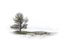 snow (por agustinruizmorilla) Tags: snow nevada blanco white bosque forest rio river tajo tajus nacimiento born
