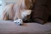 upper west side (Charley Lhasa) Tags: fujifilmx70 fujifilm x70 185mm iso1000 ¹⁄₆₀secatf28 ‒1ev aperturepriority pattern noflash dsf3828 raw uncropped taken161211145230 uploaded161230013444 2stars flagged adobelightroomcc20158 lightroomcc20158 adobelightroom lightroom charley charleylhasa lhasaapso dog toy toys treats gifts aly joel bed home apartment bath grooming upperwestside uws manhattan newyorkcity nyc newyork ny tumblr161229 httpstmblrcozpjiby2gw2adr