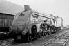 Scottish Streak (4486Merlin) Tags: bw england europe exlner lnerclassa4 northeast railways steam streak transport unitedkingdom northblyth tyneandwear gbr kingfisher 60024 hughesbolckows