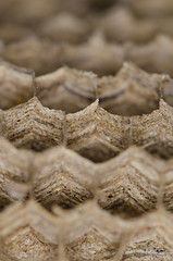 Wasps' nest (Spannarama) Tags: waspnest waspsnest honeycomb hexagons hexagonal macro closeup