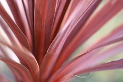 Pink stripes (katjacarmel) Tags: pink nature natuur roze stripes art winter color light
