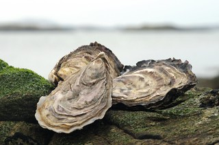 May the world be your oyster...