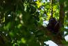 47. Around Palenque, Chiapas, Mexico-17.jpg (gaillard.galopere) Tags: america amérique animaux chiapas couleur ethnicitéetnationalité gaillardgalopere mex mx mexico mexique noir palenque personnes travel voyage animal animals animauxsauvages black bright brillant brillante claro color colorful coloré green loverlander lustroso monkey mono overland overlanding singe verde vert viesauvage wild wildlife