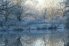 A Frosty Fence Friday (jillyspoon) Tags: frost hoarfrost niddgorge rivernidd northyorkshire fosty cold frosty winter icy ice white trees canon70d canon 70d fencefriday fence fencereflections reflections brokenfence riverreflections harrogate canon70200mm 70200mm lseries