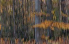 the thick and the thin of it ... (Edinburgh Nette ...) Tags: icm woodland trees beech fagus blur ribbet