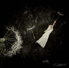 Dandelion Trip (clabudak) Tags: dandelion flower seeds wind space flyaway travel maiden blackandwhite