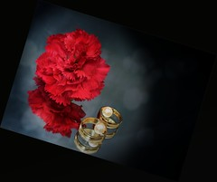 Reflections of Love. [Explore] (Mulewings~) Tags: bestill stilllife reflections red carnations mirror indoors rings beads tilt on1raw2017 explore