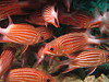Red school (Lerotic) Tags: uw underwater egypt redsea scuba diving