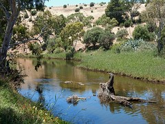 Green Reeds and Dry Grass (mikecogh) Tags: oldnoarlunga onkaparingariver bucolic log submerged reeds pretty picturesque