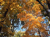 FullSizeRender (41) (sswartz) Tags: michigan fall autumn nature autumnleaves leaves leaf trees forest woods