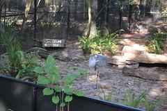 Skunk Den 15/12/2016 - 2 (s.kosoris) Tags: skosoris nikond3100 d3100 nikon tampa tampazoo bird crane animal