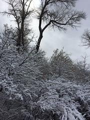 IMG_2223 (augiebenjamin) Tags: winter provocanyon mountains orem provo lindon utah snow clouds trees sky byu brighamyounguniversity art