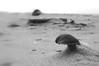 Wind Art on the beach (gelein.zaamslag) Tags: holland nederland thenetherlands zeeland nature beach art sand sheep shell shells sea macro macrophotograpy blackandwhite monochome bw zwartwit geleinjansen