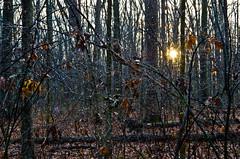 Droplets (ramseybuckeye) Tags: kendrick woods metropark allen county ohio january pentax art life nature droplets rain drops trees branches sun starburst sunburst burst sigma 1750 28