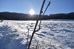 PHO_0133 (Dimi_M) Tags: neige soleil nature foret
