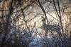 Deer (Heidi Spiegler) Tags: deer wildlife winter animal wild snow sunrise