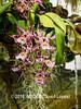 Duke Farms orchids-4142068-2 (myobb (David Lopes)) Tags: dukefarms hillsborough nj newjersey flower nature orchids olympus em1 omd