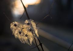 106 (natachacoco) Tags: soleil coucherdesoleil sunset lumiere plante nature rail railroad