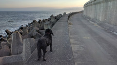 Torness day out. (Pops McKendry) Tags: torness poppymckendry popsmckendry seadefence