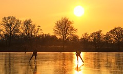 Skating into the sunset knowing it's their last day of ice (B℮n) Tags: wijdemeren ankeveense plassen ice skating ijspret ijs iceskating thenetherlands holland iceskate schaatsen waterland elfstedentocht natuurijs ijstochten wintertime skatingonnaturalice dutchskaters schaatseninwaterland skateoutdoor schaats schaatsgekte bevrorenmeer nearamsterdam wijwillenijsvrij dutch tradition seaofice polders sneeuw snow skates koekenzopie speedskaters frigidconditions cold winter hailing ijsoppervlakte dichtbevroren schaatsrijders schaatstocht genieten enjoy pleasure ijzers sunshine freeze noren klapschaatsen klapschaats skaters pootjeover nederland netherlands kids children fun sun sunset golden gold 100faves topf100