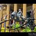 _D7B7677_bis_Teatro_Massimo