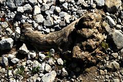 83 - Natural footprint. (onesecbeforethedub) Tags: travel nature copenhagen denmark nikon traveling kyrgyz kyrgyzstan vassilis flusser vilem galanos   onesecbeforethedub onesecbeforetheend d3100