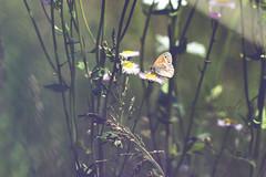 secret world (shutterbu99er) Tags: flowers wild macro field butterfly weeds bee hiddenworld