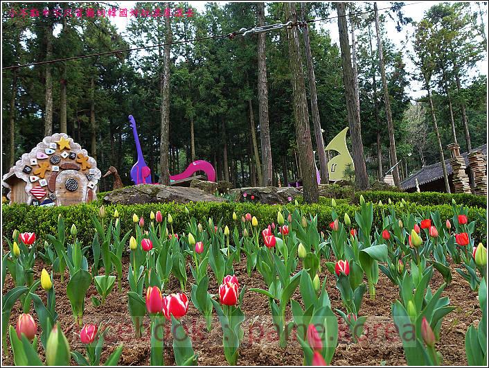 順天觀光巴士 5wood land (20).JPG