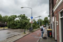 Zomerstorm (didjtijn) Tags: trees storm broken haarlem weather bomen wind nederland fallen nieuws noodweer schade omgevallen zomerstorm