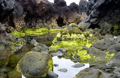 lavakust met zeewier bij Tenesar, Lanzarote 2015 (wally nelemans) Tags: seaweed lanzarote canaryislands islascanarias 2015 zeewier lavacoast canarischeeilanden tenesar lavakust