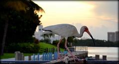 Throwback Thursday. (Papa Razzi1) Tags: morning summer bird florida miami july fl 2012 5417