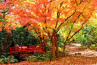 Autumn Leaves in Todoroki Valley Park in Setagaya, Tokyo : 等々力渓谷公園の紅葉