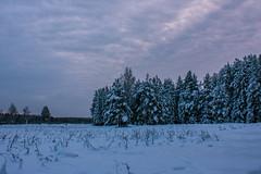 Лес в Алёшино