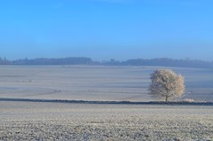 Winter tree (Tobi_2008) Tags: winter landschaft landscape himmel sky baum tree hessen deutschland germany allemagne platinumheartaward