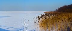 Świerklaniec / Wymysłów ❄ (ChemiQ81) Tags: polska poland polen polish polsko chemiq d5100 nikon nikkor polonia pologne ポーランド بولندا полша poljska pollando poola puola πολωνία pholainn pólland lenkija polija польша пољска poľsko polanya lengyelországban lengyel lengyelország польща польшча 2017 winter zima outdoor śnieg snow white biały śląsk schlesien silesia slezsko orzech piekary śląskie kozłowa góra świerklaniec garb tarnogórski zbiornik jezioro zamarznięty frozen covered pokryty śniegiem
